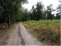 Bosque de las Landas. Francia