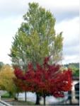 Périgueux en otoño